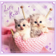 Puzzle - 3 in 1 - Sweet kittens / Getty Images